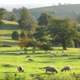 Park Wing Fursdon Exeter self catering holidays